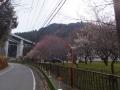 2surusashi_bairin